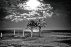 in pairs under the moonlight (Fnikos) Tags: sky skyline cloud moon light moonlight sea serene seascape shore coast palmtree night blackandwhite monochrome outdoor