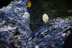 Oct2016 South Mtn State Park 18 (furrycelt) Tags: jacobsforkriver jacobsfork nikon85mmf14afd nikon85mmf14 northcarolina southmountainstatepark southmountains ianwilson jianwilson photographersoftumblr 85mm d600 nc nikon october autumn fall forest furrycelt leaves lensblr natural nature river rocks sunlight trees water woods