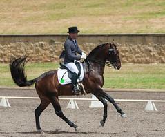 161023_Aust_D_Champs_Sun_Med_4.2_6223.jpg (FranzVenhaus) Tags: athletes dressage australia siec equestrian riders horses performance event competition nsw sydney aus