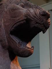 Stone Roar (failing_angel) Tags: 191215 london camden bloomsbury britishmuseum colossalguardianlion nimrud templeofishtar sharratniphi ishtar assyria goddessofwar ashurnasirpalii austenhenrylayard iraq
