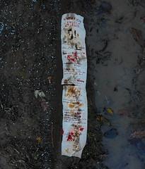 """Poem """"Latrine"""" by Günter Eich - written on used toilet paper. A soldier at the latrine trench. poem against glorifying war Eich`s Gedicht """"Latrine"""" auf benutztes Klopapier geschrieben. Gedicht gegen Verherrlichung von Krieg Hölderlin reimt sich auf Urin (hedbavny) Tags: klopapier gedicht poem latrine eich güntereich krieg war schein form realität inhalt soldier soldat krieger handschrift kot blut urin braun brown weis white recycling red rot blutrot bloody gelb yellow gatsch lehm lacke lache puddle spiegel mirror spiegelung reflection wasser water matsch verwesung klo toilette plumpsklo leaf blatt laub herbst autumn himmel sky schnee snow schneeweis schneeig wolke cloud wienflus ferdinandwolfpark hedbavny ingridhedbavny aktion aktionismus papier paper wien vienna austria österreich winter fäkalien ausscheidung tinte"""