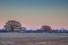 A Winters Scene In Rural Oxfordshire (Peter Greenway) Tags: winter oxfordshire ruralfields oxfordshirecountryside sunset winterscene winterlight fields field