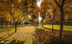 Autumn dreams (Diana Gallego) Tags: autumn otoo november noviembre tree rbol dreams canon canon1200d 1855