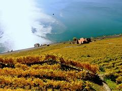Land of the two suns (oobwoodman) Tags: switzerland suisse schweiz lakegeneva lake lac lman leman genfersee lausanne lavaux grapes corniche vignoble vignes vineyards vin wein trauben rebe vendange see reflection sunshine sonnenschein vaud epesses stsaphorin dzaley calamin