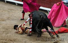Cogida del novillero Luis Lpez en Acho (Vladimir Tern A.) Tags: toros toreros corridadetoros limaperu bulls bullfighting bullfighters