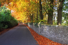 Golden Road (Martyn.Smith.) Tags: trees leaves autumn colour sunlight road wales flickr cymru powys southwales canon eops 700d image photo fallcolor