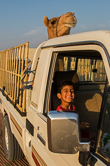 Oman 2016 (d.vanderperre) Tags: oman middleeast kid bedouin camel