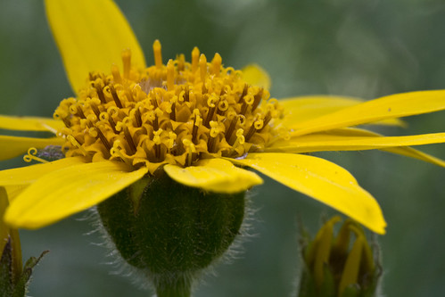 Closeup on yellow flower