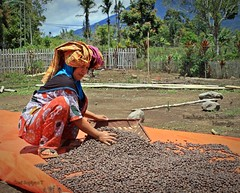 Perempuan dan kopi (Hafid Wanala) Tags: landscape coffee perempuan kopi highlands jangkat sungaitenang hulujambi outdoor culture journalisme