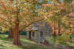 Fall is coming (blususan_406) Tags: springhouse trees shady dappled dawnredwood stonework newlingristmill glenmills pa pennsylvania