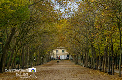 Autumn, Jardin du Luxembourg.. (ckollias) Tags: paris architecture autumn beauty nature day growth no people outdoors tranquility tree