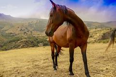 Horse (Almu_Martinez_Jiménez) Tags: naturaleza caballos horse alpujarra canon canonista atardecer sunset lugar andalucía