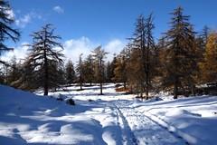 alpage du Tronc (bulbocode909) Tags: valais suisse alpagedutronc montchemin montagnes nature alpages arbres mlzes traces chemins nuages paysages bleu neige