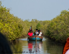 Pondicherry. (Tushar Gohil) Tags: pondicherry pichavaram mangrove forest