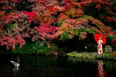 Autumn in Japan (Blue Ridge Walker) Tags: