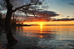 viale d'autunno voglio imparare ancora (piselli.antonella) Tags: torricella trasimeno lago