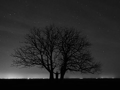 Supporting the Twins (Budoka Photography) Tags: blackandwhitephotos bw blackandwhite budokaphotography copyright nightphoto night nightheaven nightsky monochrome tree longexposure le stars starheaven starry nature landscape outdoor silhouette serene selfie sonysel1635f4 sonyalphailce7rm2 7dwf