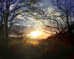 Sunset (Armine Abrahamyan) Tags: iphone photography photographie photograph landscape landschaft natur nature 6plus 6 tree trees baum bume himmel clouds sunlight sun sunset sunshine sonnenuntergang sonnenlicht colors countryside