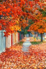 Autumn sidewalk (elenashen5) Tags: autumn red road sidewalk