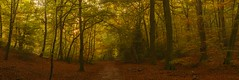 Burnham Beeches Autumn Panorama (Explored) (sunstormphotography.com) Tags: burnhambeeches buckinghamshire woodland autumn path woods wood trees southeastengland burnham westlondon woodlandpath panoramic canon24105l canon5dmark3 polarisingfilter landscape