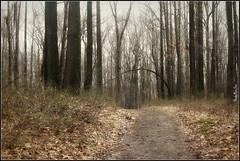 Coopers Rock Road (rhondamarierose73) Tags: road morgantownwestvirginia coopersrockstateforest rhondamarierose