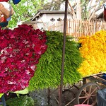 "Flower Market <a style=""margin-left:10px; font-size:0.8em;"" href=""http://www.flickr.com/photos/14315427@N00/7070346389/"" target=""_blank"">@flickr</a>"
