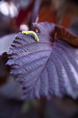 Un matin, dans mon jardin... (Fabisa00) Tags: macro up close pentax jardin matin