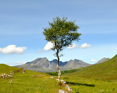 lonely birch (Senaid) Tags: shadow tree scotland interestingness highlands nikon isleofskye lonely birch fp frontpage kilbride blaven explored cuillinridge breakingtherulesofphotography craobh d5000 dubhard aonranach