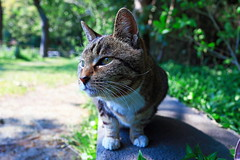 / May I play only a little? (taniuniyana) Tags: cat canon eos yokohama    6d cateye