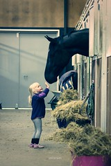 Hi Horse! (vesterskov) Tags: horses horse barn photography photo foto ride bokeh daniel sony riding western pro 28 mm stable f28 dt slt ssm hest corel fotografi a77 horsemanship 1650 bibble heste stald aftershot 1650mm vesterskov slta77 slta77vq a77vq 281650