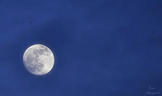 Luna lunera...