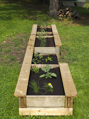 New Herb Garden (cjh44) Tags: ontario home cooking garden herbs kingston