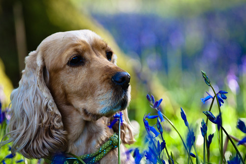 Breagha In Bluebells
