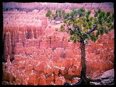 Bryce Canyon 2012 (debb.ryan) Tags: summer usa tree sunshine nationalpark stunning brycecanyon amazingview panasoniclumix flickrandroidapp:filter=peacock