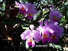 Orquidea (fonseca27) Tags: casa orquidea quintal flres
