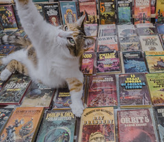 _MG_7601 (soraxtm) Tags: cats books