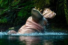 Open Wide and Say Aaaaaahh! (Don Sullivan) Tags: hippo hippopotamus splash