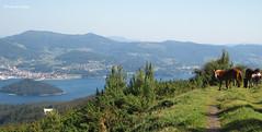 Vistas desde el Monte Castrove (-Fernando- d[^_^]b) Tags: horse caballo panoramic galicia galiza panormica cabalo montecastrove