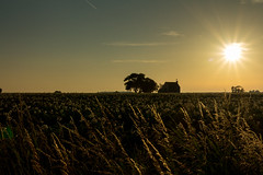Sunset over farm (Nils Croes) Tags: sunset summer sun field set contrast canon potatoes farm potato agriculture 1740mm 60d