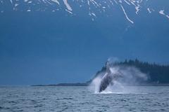 IMG_0120 (shermantoribio) Tags: sun snow mountains flower ice nature fog alaska clouds landscape frozen glacier seal whale humpback norwegiancruise