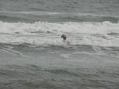 P1320114 (dianjo) Tags: northumberland northsea druridgebay seaswimming