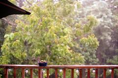 """Rain, Rain, Go Away..."" (Brock5604) Tags: trees cactus storm slr film nature water rain weather strand umbrella 35mm canon shower lights kodak ae1 outdoor rail deck rainy porch string raining pouring ektar"