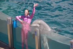 SeaWorld California (FabienA380) Tags: california usa pentax sigma dolphins kr seaworld dauphins unitesstates unitesstatesofamerica 18250mm