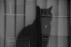 Spiritual ! (CJS*64) Tags: bw monochrome cat blackcat mono blackwhite nikon nikkor cjs whiteblack nikkorlens 18mm105mmlens d3100 nikond3100 craigsunter cjs64
