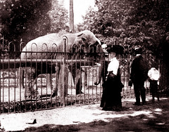 In the Old Toronto Zoo, 1908 (JFGryphon) Tags: elephant cabbagetown torontozoo 1908 oldtoronto riverdalezoo ansonmcnish oldtorontozoo