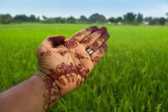 Marudhani (Mehendi) (Ilakkiaraj) Tags: india green floral design village celebration agriculture mehendi tamilnadu pongal paddyfield southindia marudhani nikond3200 ilakkiaraj mayilanji