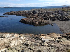 2016 09 19 Cattle Point_0027 (Blake Handley) Tags: blake blamar cattlepoint oakbay victoria bc britishcolumbia vancouverisland canada dogs ocean shoreline beardedcollie beardie