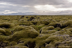 Moss covered landscape over lava field (luca.onnis) Tags: islanda iceland lucaonnis photography landscape moss lavafield green