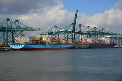 2016 10 17 MPET Terminal DST_9992 (larry_antwerp) Tags: mpet maersk msc mediterraneanshipping psa container terminal antwerp antwerpen       port        belgium belgi          schip ship vessel