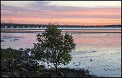 Sunset Cloud over Hayes Inlet Clontarf-5= (Sheba_Also Millon + Views) Tags: sunset cloud over hayes inlet clontarf